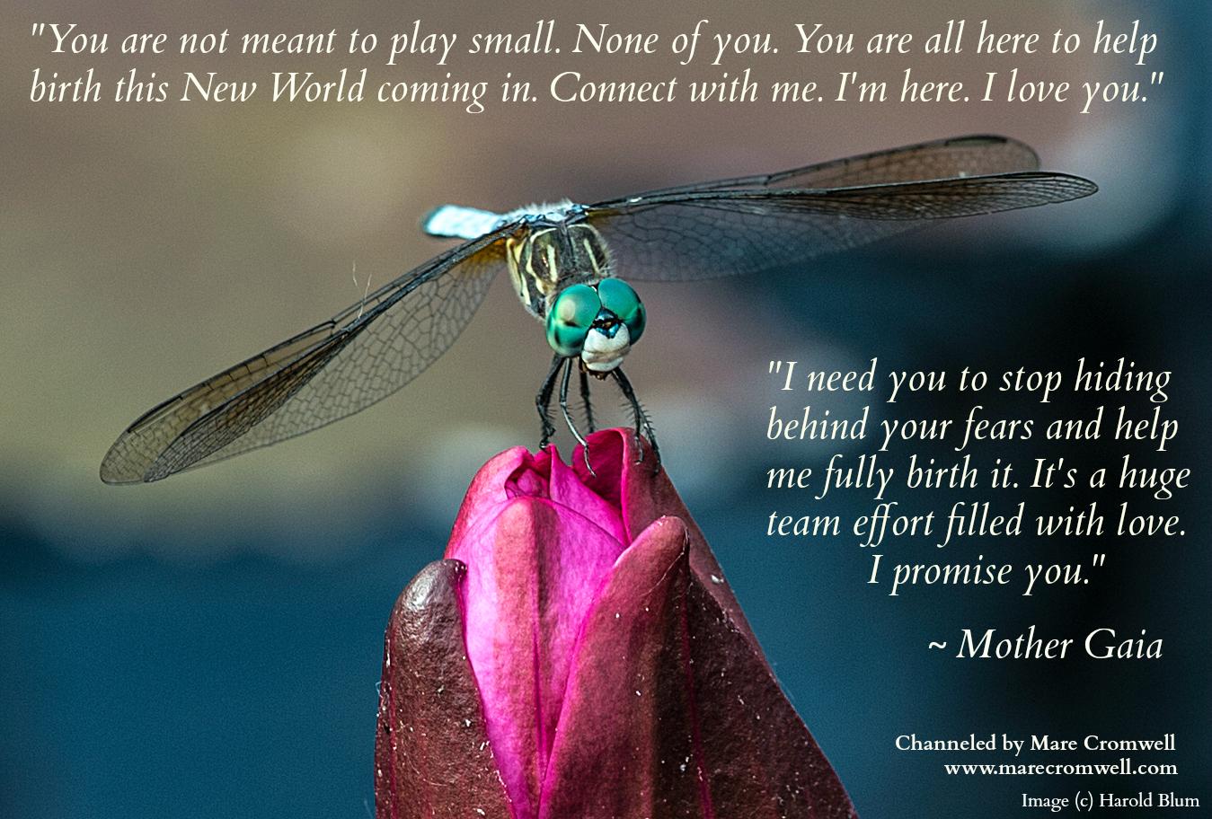 5.25.DragonflyBud.Msg
